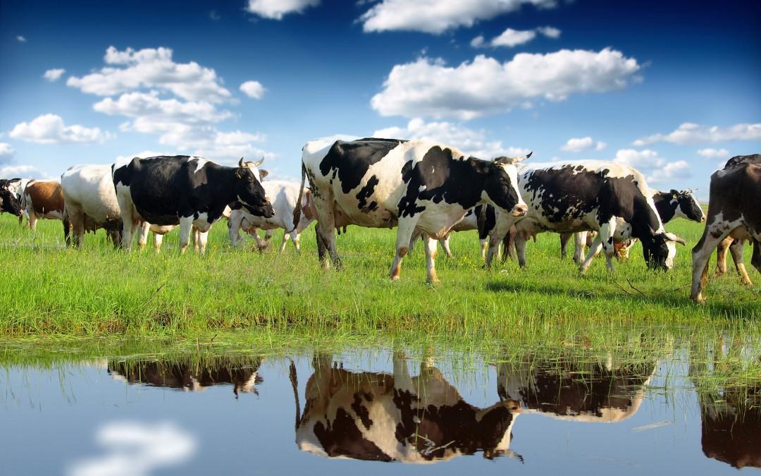 Latte Biologico Opportunita Per L Agricoltura Risorsa Per Il Territorio Comazoo Prodotti E Servizi Per Bovini Da Latte Per Bovini Da Carne E Per Suini