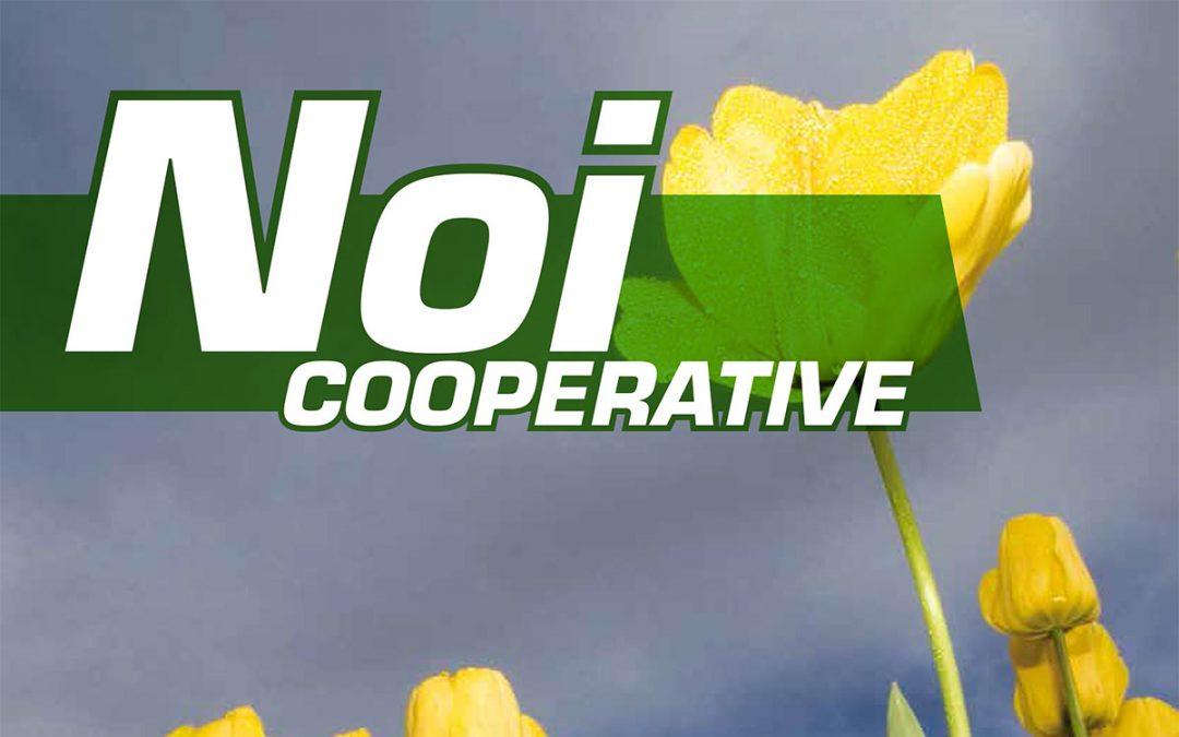 Noi Cooperative – 2015 N.13