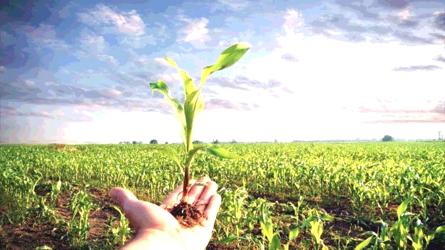 BIOLOGICO: contratti di coltivazione 2017/2018