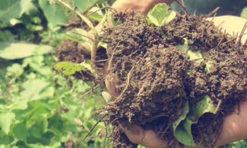 Rafforzare produttività e redditività della produzione agrozootecnica bio