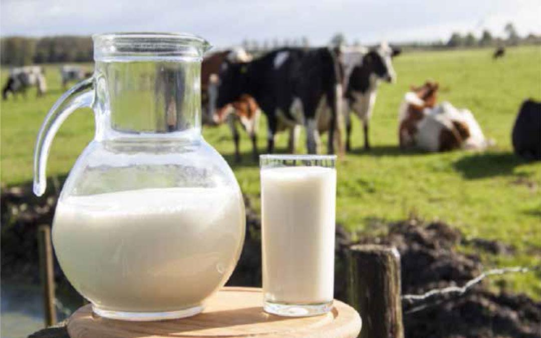 Stress da caldo e bilancio aminoacidico nella vacca da latte