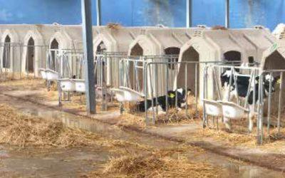 Criptosporidiosi dei vitelli