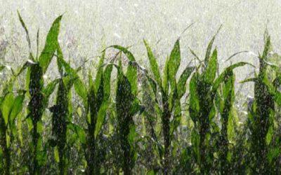 Suinicoltura: modello sostenibile